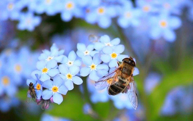dreams of bees